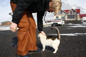 Lysuholl-Katze